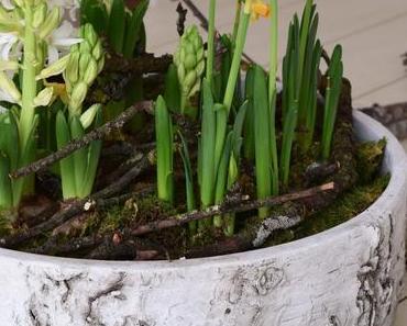 Der Frühling zieht ein: Frühlingsblüher und ganz viel Natur für euren Tisch