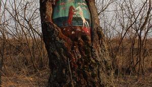 Street oder Baum-Kunst?