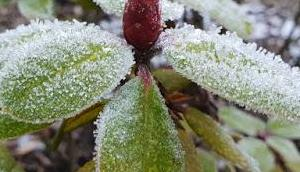Frost Januar