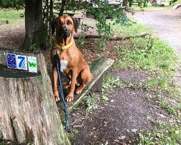 WesterwaldSteig mit Hund – Etappe 6