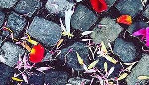 Happy Valentine's Day..🥀  #berlin #berlinspiriert #blog #blogger #love #lifestyle #berlinlove #berlinlife #igers #igersberlin #igers_berlin #ig_berlin #ig_berlincity #berlin365 #valentine #valentinesday2019 #flowers #for #everyone #flowerstagram