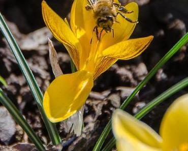 Aus meinem Garten, 16. Februar 2019 – Der Frühling kommt