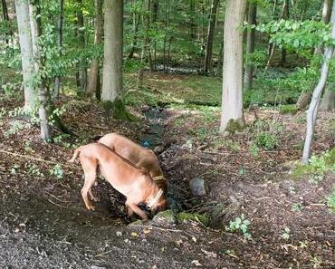 WesterwaldSteig mit Hund – Etappe 7