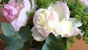 Friday-Flowerday oder Pfingstrosen, auf's Schönste erblüht