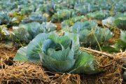 """Mehr als 50% der meistverkauften Lebensmittel im Supermarkt sind """"ultraverarbeitet"""""""
