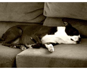 Blog-Coaching oder Blog-Couchpotato?!
