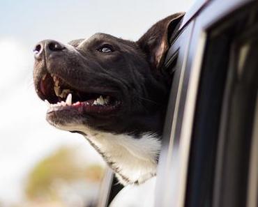 So deckst du den Proteinbedarf deines Hundes – nachhaltig