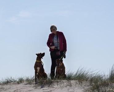 Texel – unterwegs in den Dünen bei Paal 17
