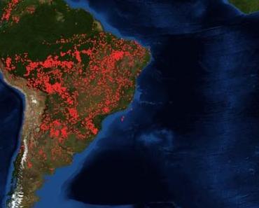 Der Amazonas-Regenwald brennt. Was es für uns und das Klima bedeutet.