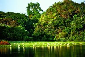 Flüsse Lateinamerikas Superlative touristische Highlights