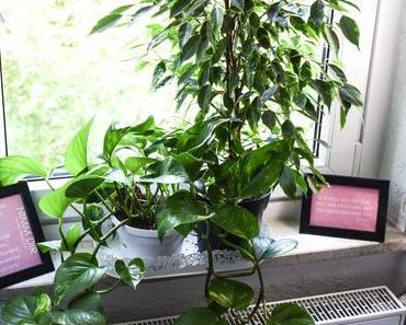 Zimmerpflanzen: Tipps für die richtige Pflege