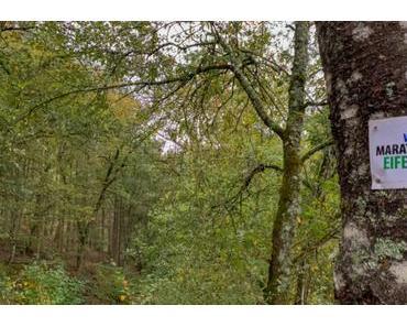 Wandermarathon in der Eifel – Die Säubrennerroute