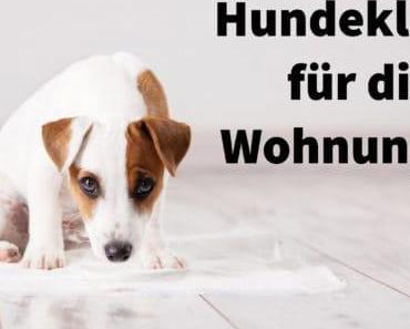 Hundeklo für die Wohnung