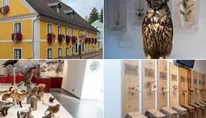 Eröffnung neuen Naturkundemuseums Mariazell Oktober