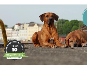 Blogger Award – HundeReisenMehr ist unter den TOP 10