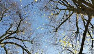 Foto: letzten Blätter Bäumen