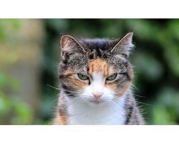 Katzenjahre in Menschenjahre umrechnen – So alt ist deine Katze wirklich