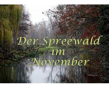 Der Spreewald im November