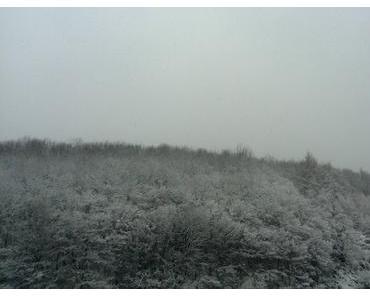 Foto: Verschneiter Wald