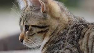 Katzenbabys erziehen sollte dein Kitten lernen