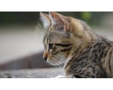 Katzenbabys erziehen – Das sollte dein Kitten lernen