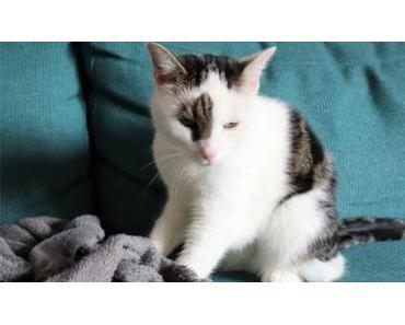 """Milchtritt bei Katzen – Warum """"treteln"""" auch erwachsene Katzen?"""