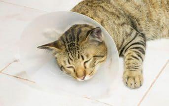 Katernamen – Die Liste mit den coolsten Namen für männliche Katzen (300+)