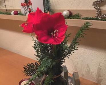 Friday-Flowerday – oder – Weihnachtliche Amaryllis