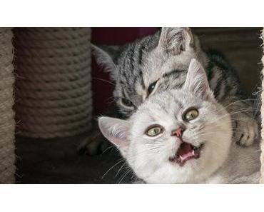 Katze oder Kater? – Unterschiede & Geschlechtsbetimmung