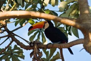 Pantanal: größtes Feuchtgebiet unseres Planeten