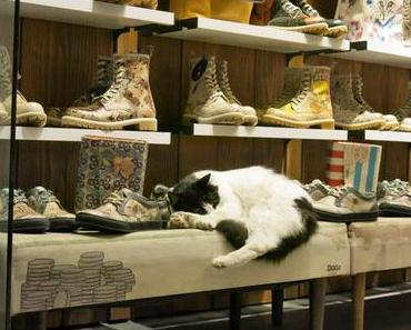 Catretail in Istanbul.