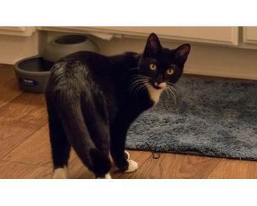 Fremde Katze im Haus – Tipps gegen ungebetenen Besuch