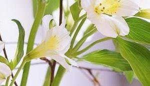 Friday-Flowerday 07/20