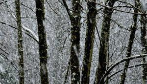 Schnee letztendlich unser Kakao Rezept
