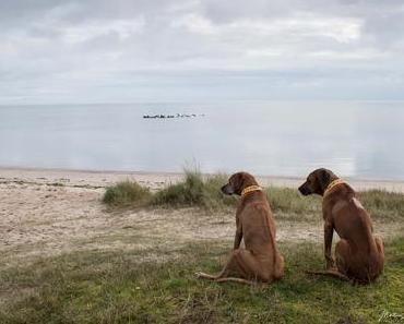 2 Tipps zum Wandern mit Hund auf Sylt