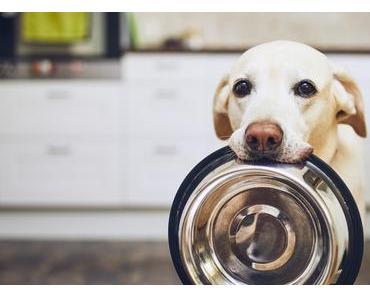 Hundeernährung in der Corona Krise