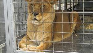 Zirkus Tieren verbieten? Contra