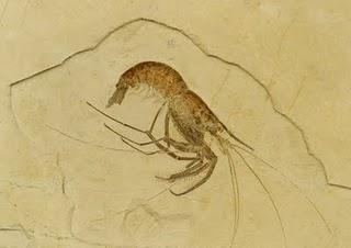 Bei Eichstätt mit Hammer und Meißel nach Fossilien suchen