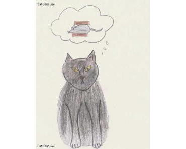 Katzen und synthetische Pheromone