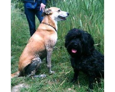 Vom Vorteil einen schwarzen Hund zu haben