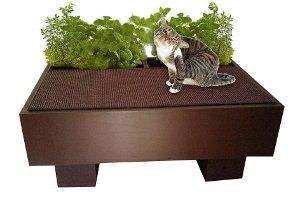 Die grüne Oase für Hauskatzen