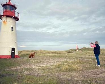 Sylt mit Hund – der Film