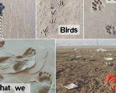 Ökologischer Fußabdruck – Was ist das eigentlich?