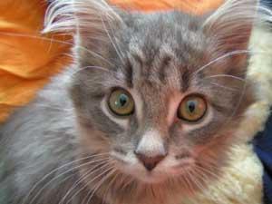 Die Aufnahme einer Katze – Was muss man beachten?