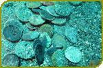 Punischer Münzschatz aus dem 3. Jh. v. Chr. im Meer gefunden
