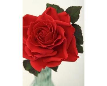 Eine einzelne rote Rose...
