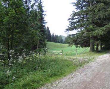 Von Puchberg über Rohrbachgraben auf den Gahns und rüber zur Schneebergbahn, 27.07.1011