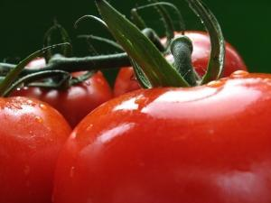 Würziger Tomaten Ketchup – kalorienfrei