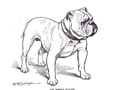 WDR - nicht einmal die halbe Wahrheit zum Bulldog