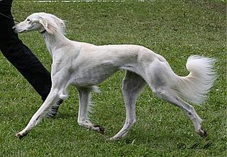 Epigenetik - Vision oder Wirklichkeit in der Hundezucht?